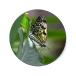 Butterfly Beauty Classic Round Sticker