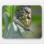 Butterfly Beauty Mouse Pad