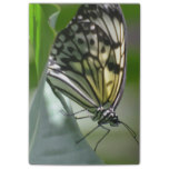 Butterfly Beauty Post-it® Notes