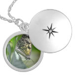 Butterfly Beauty Silver Plated Necklace