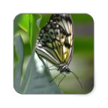 Butterfly Beauty Square Sticker