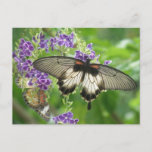 Legend of Butterflies Postcard