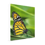 Monarch Butterfly Design Canvas Print