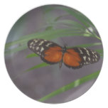 Natural Butterfly Dinner Plate