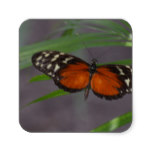 Natural Butterfly Square Sticker