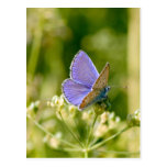 Pretty Butterfly Postcard