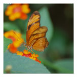Tiny Orange Butterfly Poster
