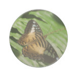 Winged Butterfly Drink Coaster