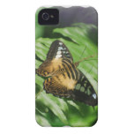 Winged Butterfly iPhone 4 Case