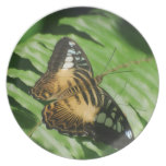 Winged Butterfly Melamine Plate