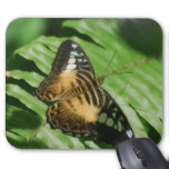 Winged Butterfly Mouse Pad