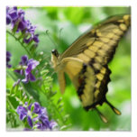 Yellow Swallowtail Poster Print