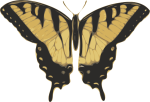 Butterfly Graphic